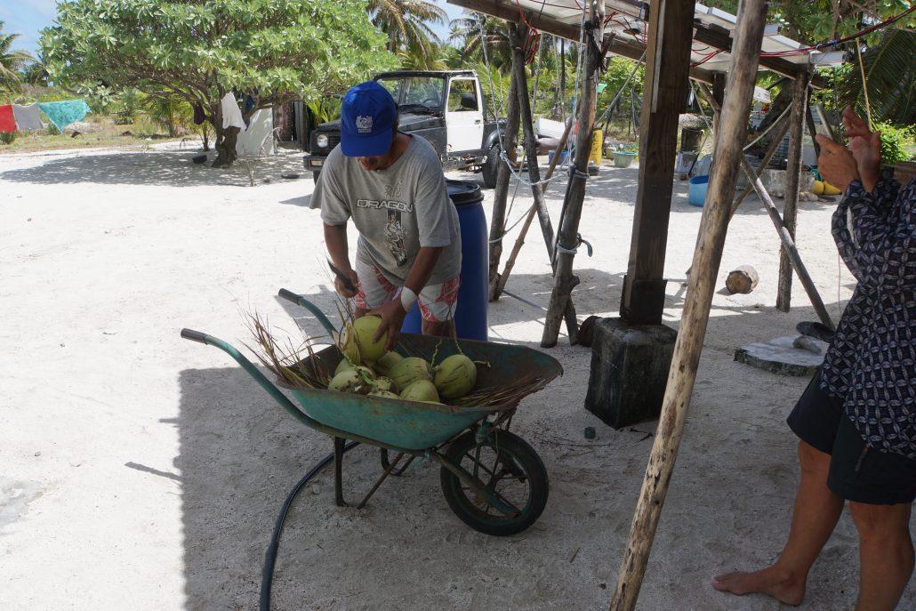 Dags för kokosdricka. Van hand öppnar med machete.