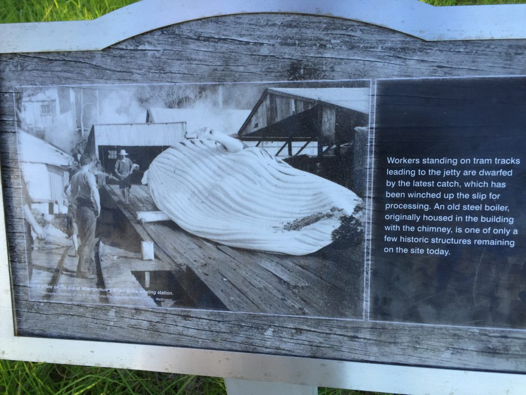 Whangamumu, viken där whaling station fanns fram till 1930.